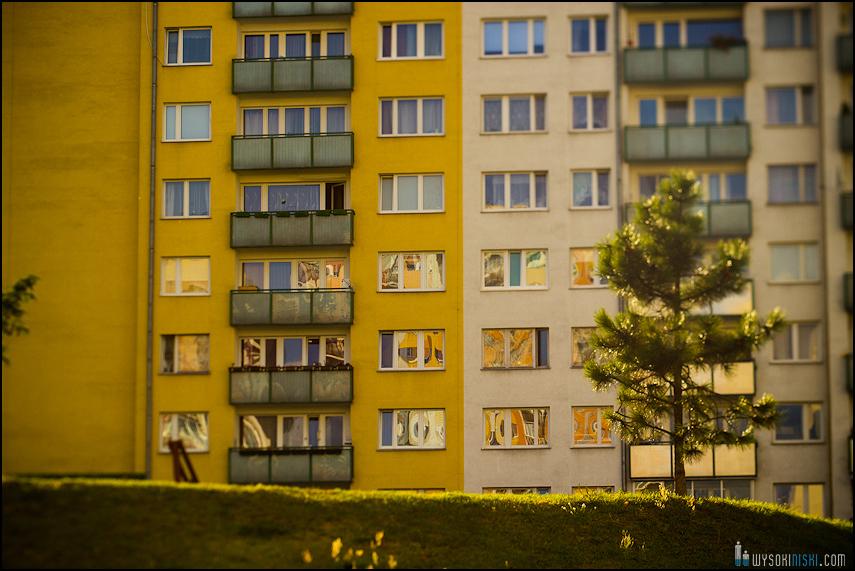 Choinka na tle bloku, osiedle Chomiczówka w Warszawie