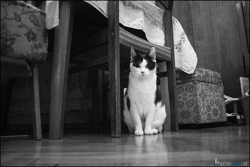 Zdjęcia kotów: Behemot pod krzesłem