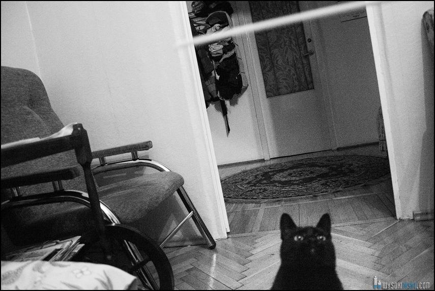 czarny kot na tle pokoju