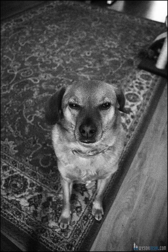 Pies alien obcy z dziwną miną