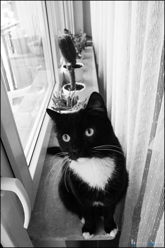 Czarno biały kot na parapecie. Zdjęcie