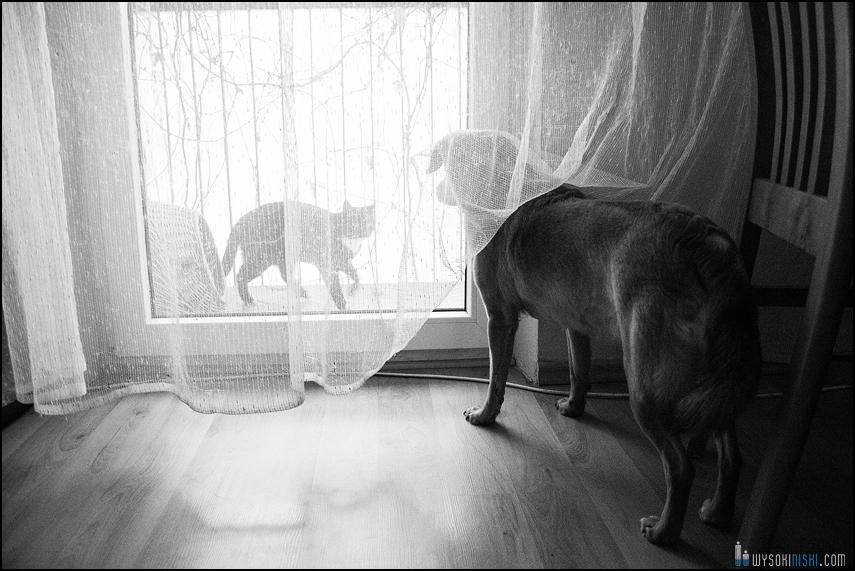 Jak pies z kotem, zwierzeta domowe