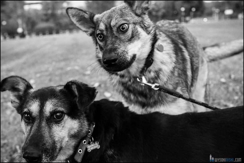 Zdjęcia psów do adopcji