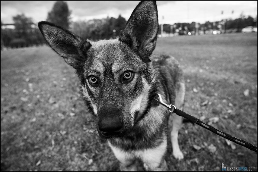Pies z wielkimi uszami, fundacja Psy Niczyje