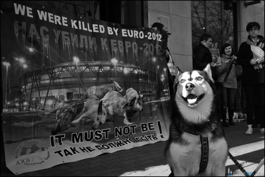 pikieta protest- przeciw zabijaniu psów na Ukrainie w ramach przygotowań do Euro 2012 (79)
