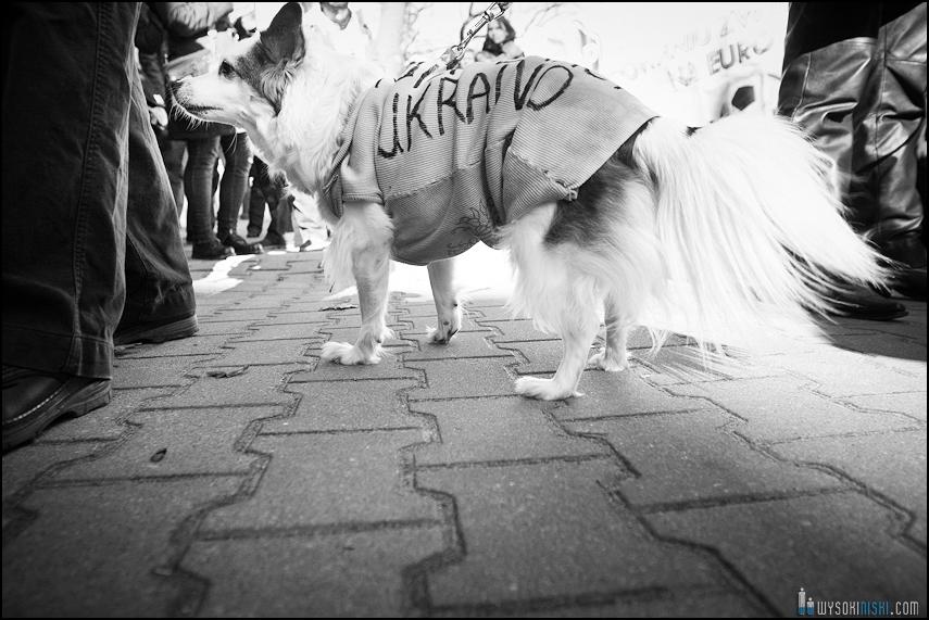 pikieta protest- przeciw zabijaniu psów na Ukrainie w ramach przygotowań do Euro 2012 (76)