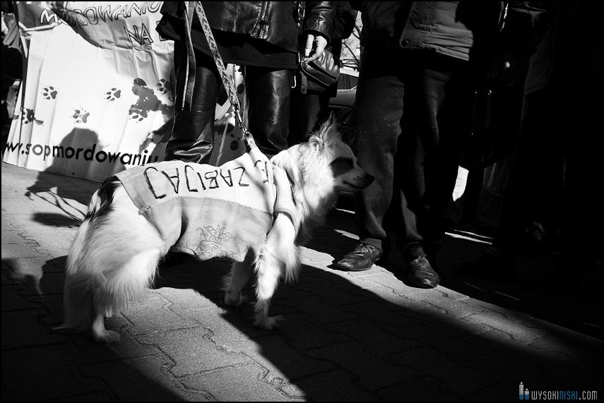 pikieta protest- przeciw zabijaniu psów na Ukrainie w ramach przygotowań do Euro 2012 (73)