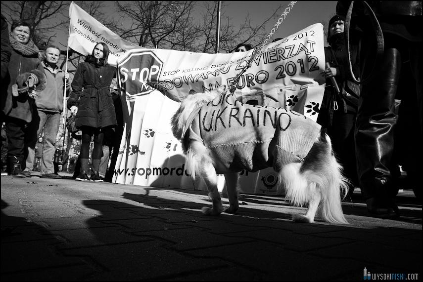 pikieta protest- przeciw zabijaniu psów na Ukrainie w ramach przygotowań do Euro 2012 (72)