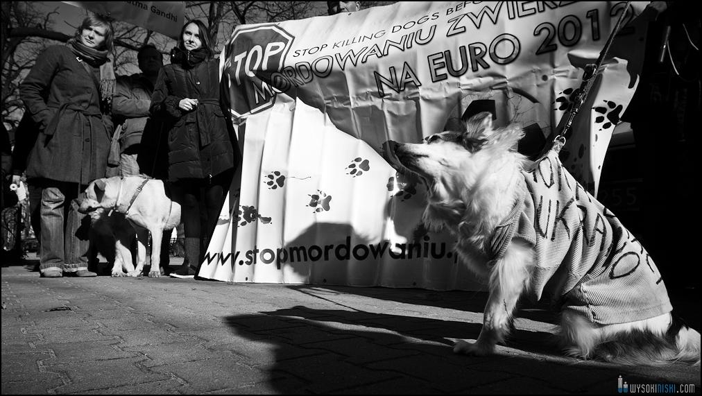 pikieta protest- przeciw zabijaniu psów na Ukrainie w ramach przygotowań do Euro 2012 (68)
