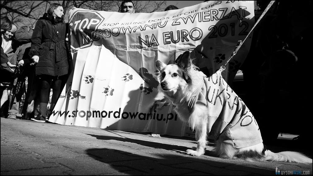 pikieta protest- przeciw zabijaniu psów na Ukrainie w ramach przygotowań do Euro 2012 (67)