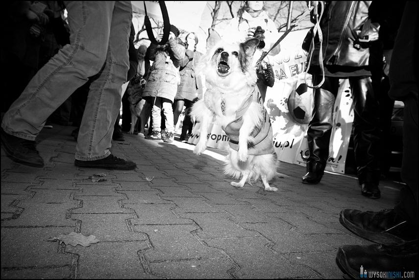 pikieta protest- przeciw zabijaniu psów na Ukrainie w ramach przygotowań do Euro 2012 (61)