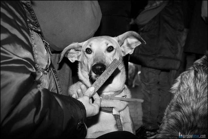 pikieta protest- przeciw zabijaniu psów na Ukrainie w ramach przygotowań do Euro 2012 (57)
