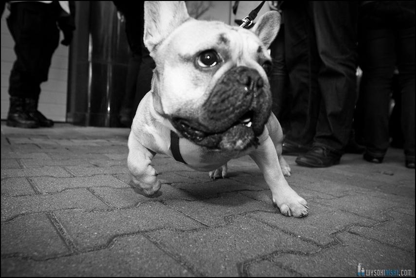 pikieta protest- przeciw zabijaniu psów na Ukrainie w ramach przygotowań do Euro 2012 (53)