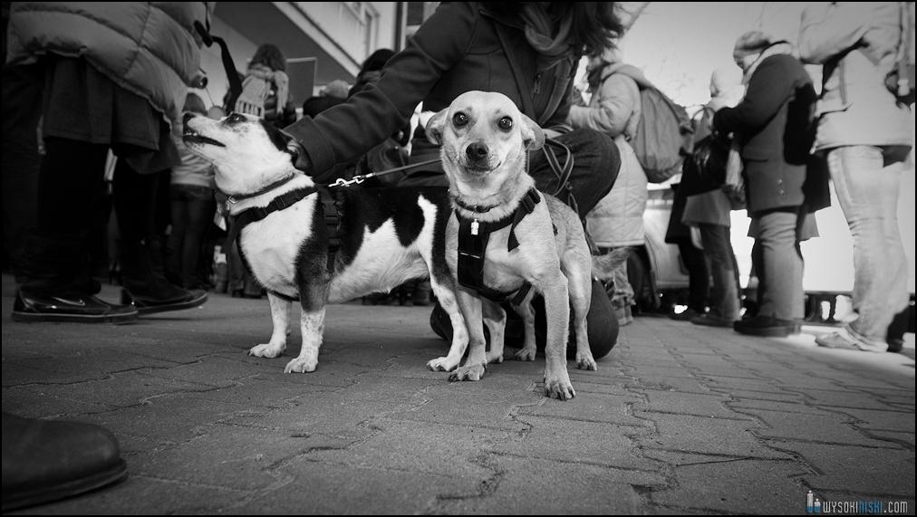 pikieta protest- przeciw zabijaniu psów na Ukrainie w ramach przygotowań do Euro 2012 (51)