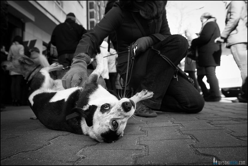 pikieta protest- przeciw zabijaniu psów na Ukrainie w ramach przygotowań do Euro 2012 (50)