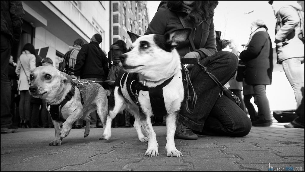 pikieta protest- przeciw zabijaniu psów na Ukrainie w ramach przygotowań do Euro 2012 (49)