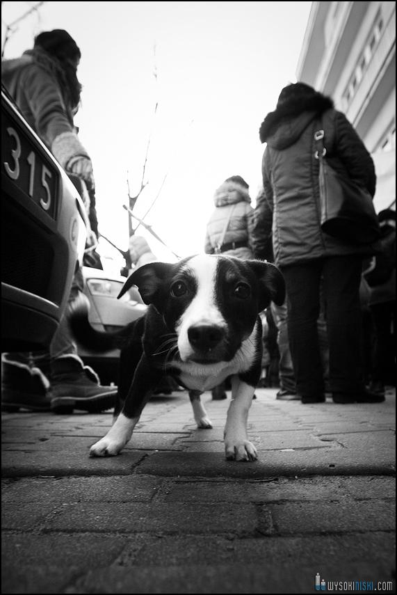 pikieta protest- przeciw zabijaniu psów na Ukrainie w ramach przygotowań do Euro 2012 (18)