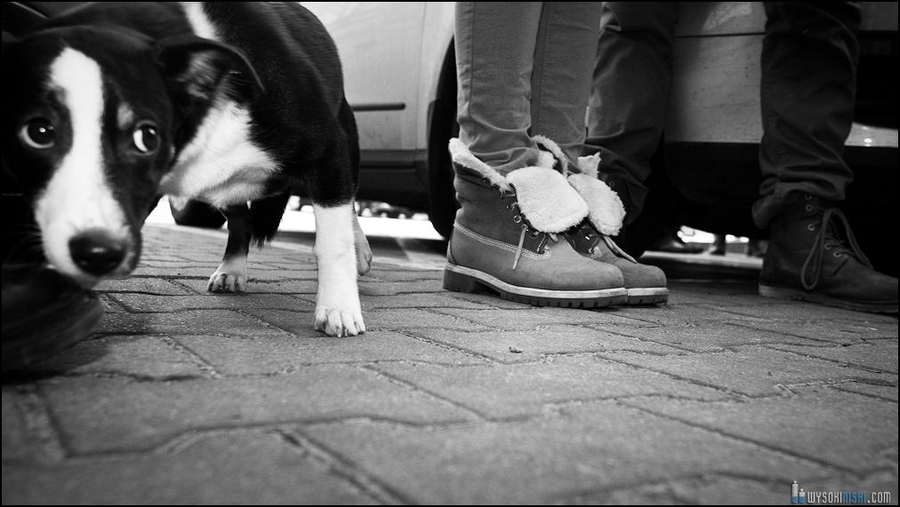 pikieta protest- przeciw zabijaniu psów na Ukrainie w ramach przygotowań do Euro 2012 (16)