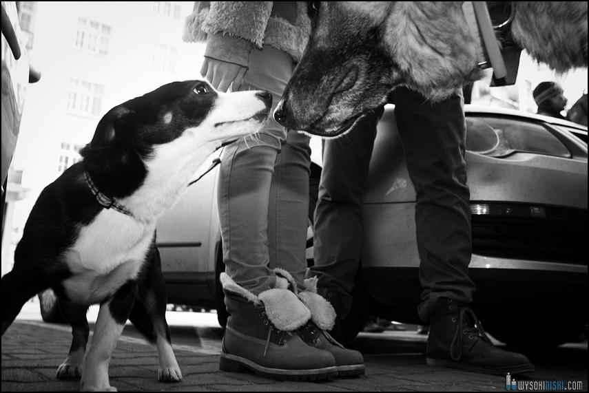 pikieta protest- przeciw zabijaniu psów na Ukrainie w ramach przygotowań do Euro 2012 (15)