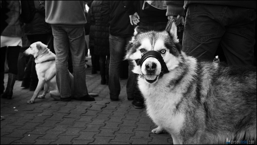 pikieta protest- przeciw zabijaniu psów na Ukrainie w ramach przygotowań do Euro 2012 (14)