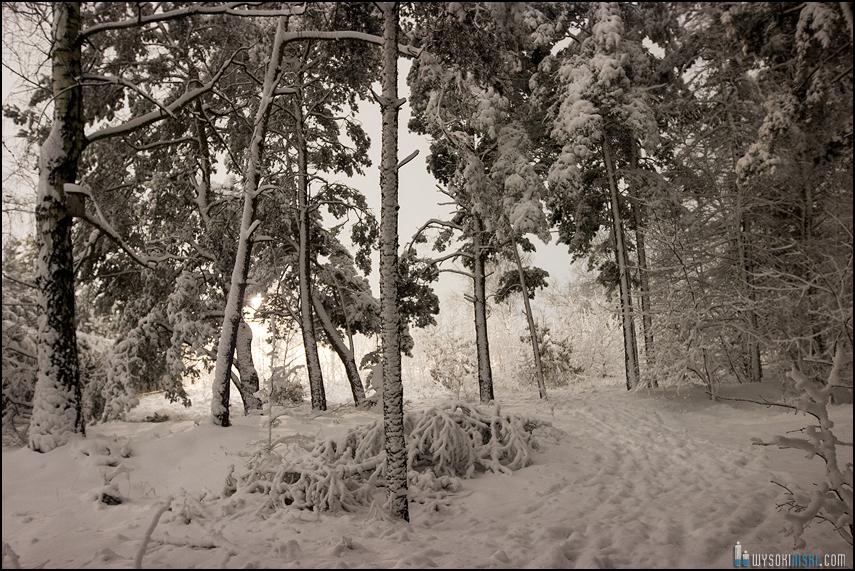 Śnieg na wiosnę, Wielkanoc 2013, Warszawa, Chomiczowka Wawrzyszew las (16)