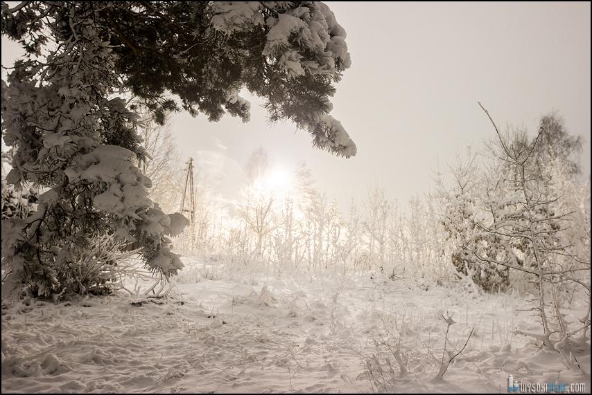 Leśny pejzaż zimą, fotografia nocna