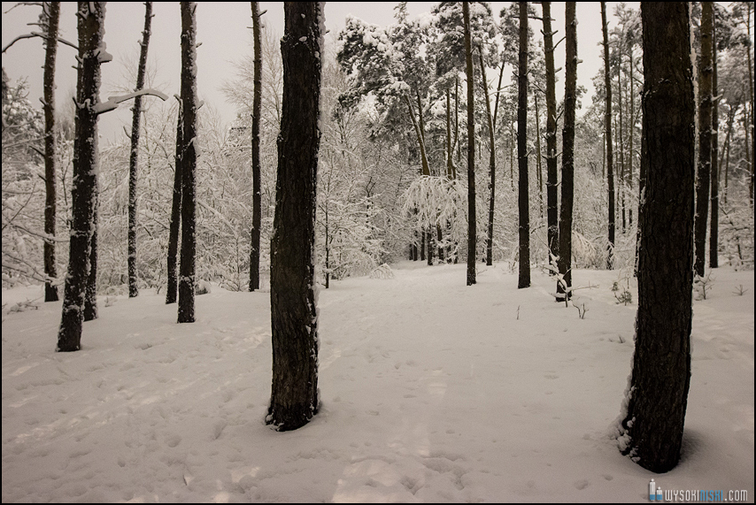 Śnieg na wiosnę, Wielkanoc 2013, Warszawa, Chomiczowka Wawrzyszew las (20)